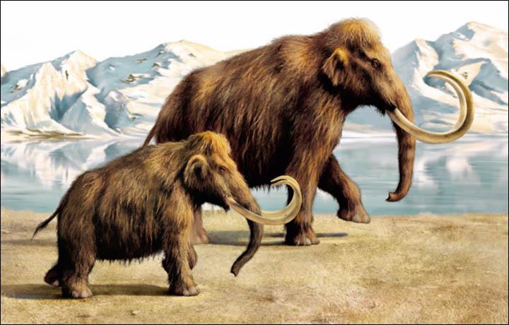 mamuts siberia