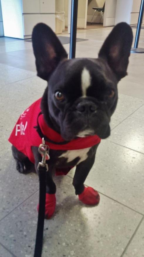 perros mascotas en aeropuertos