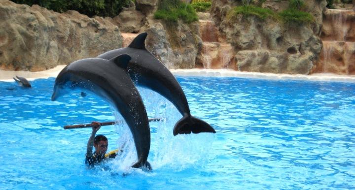 espectaculo-delfines